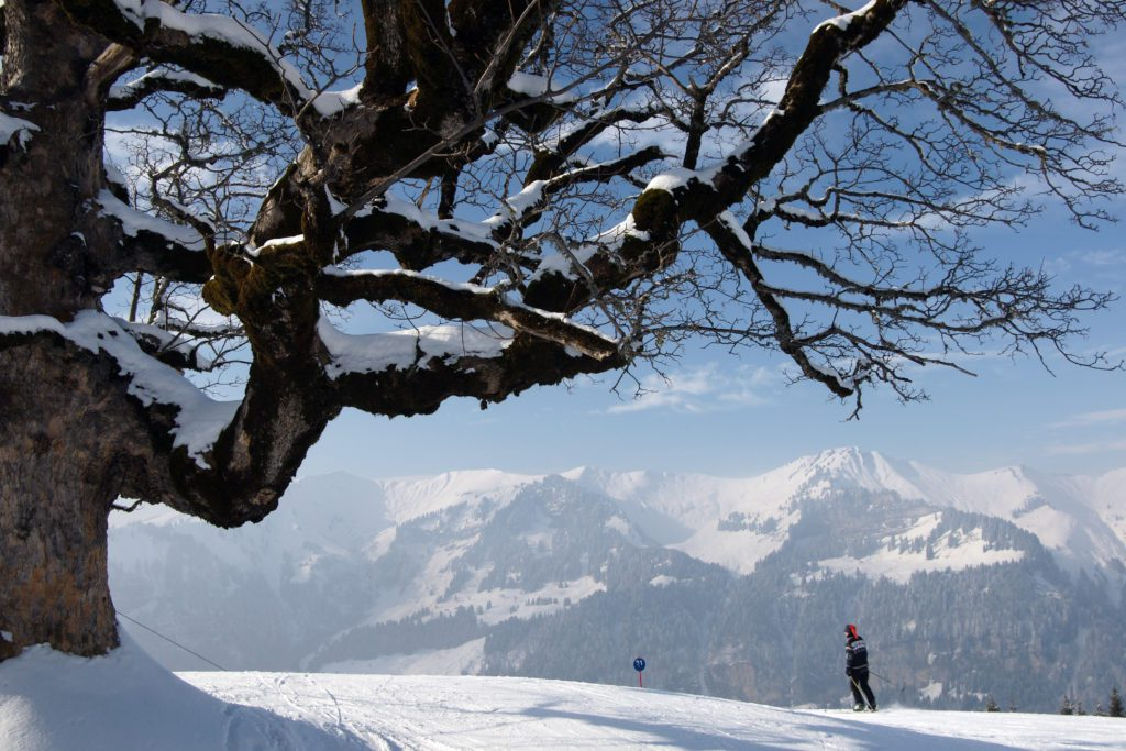 © Bergbahnen Mellau