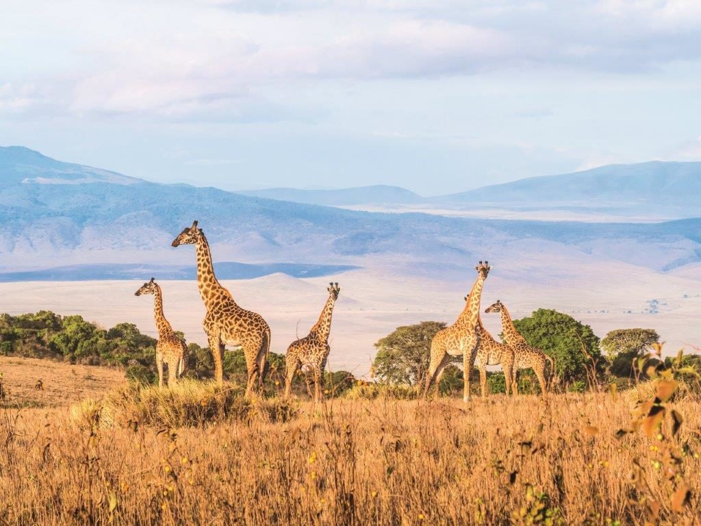 Afrika (© Globus Reisen)