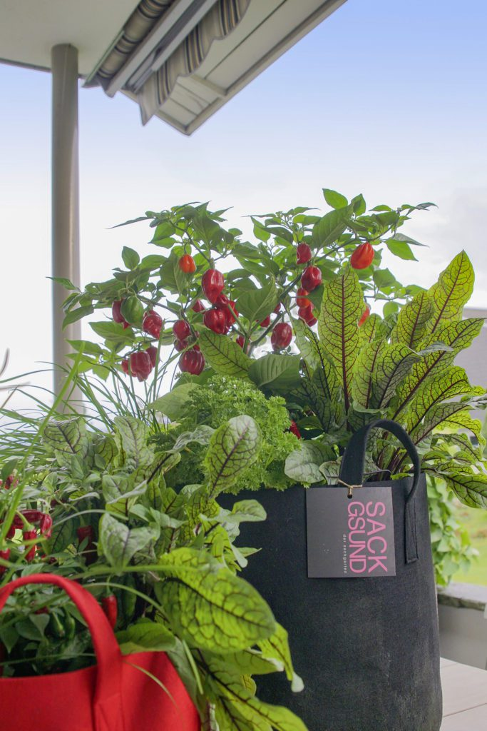 Kein eigener Garten? No Problem dank «Sackgsund» (Bild Picturegarden | Rohner)