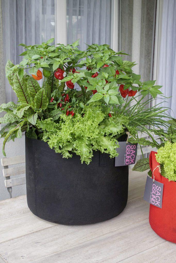Ob Balkon, Terrasse oder Garten: Sack hinstellen, giessen und nach Bedarf ernten. (Bild Picturegarden | Rohner)