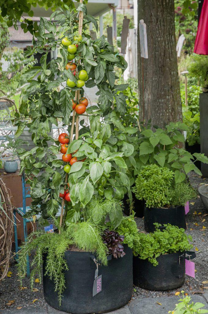 Sackgsund-Säcke gibt es in verschiedenen Grössen und Farben. Ideal auch für Tomaten. (Bild Sackgsund.ch)