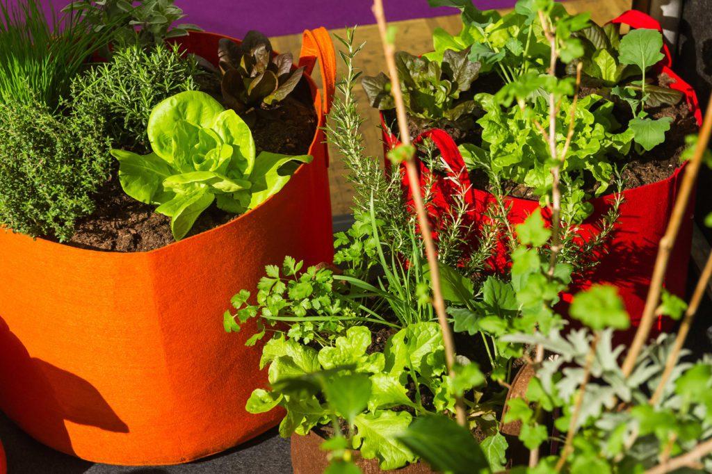 Giardina 2017 | Fokusthema |Balcony Gardening | Sackgsund