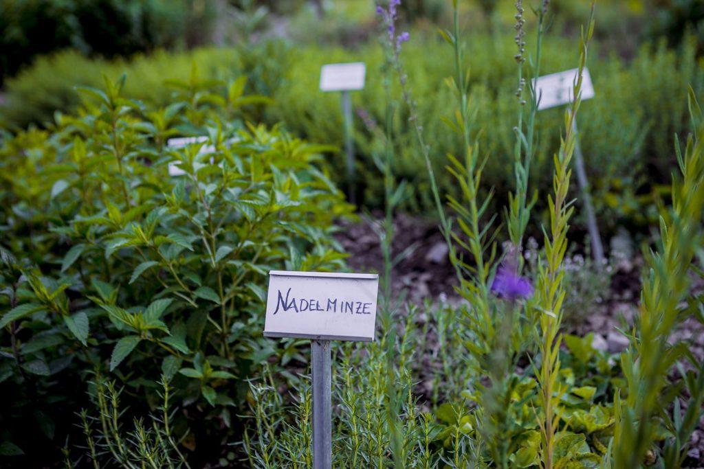 Schloss Wartegg - Nadelminze (© Garten Hotels Schweiz)