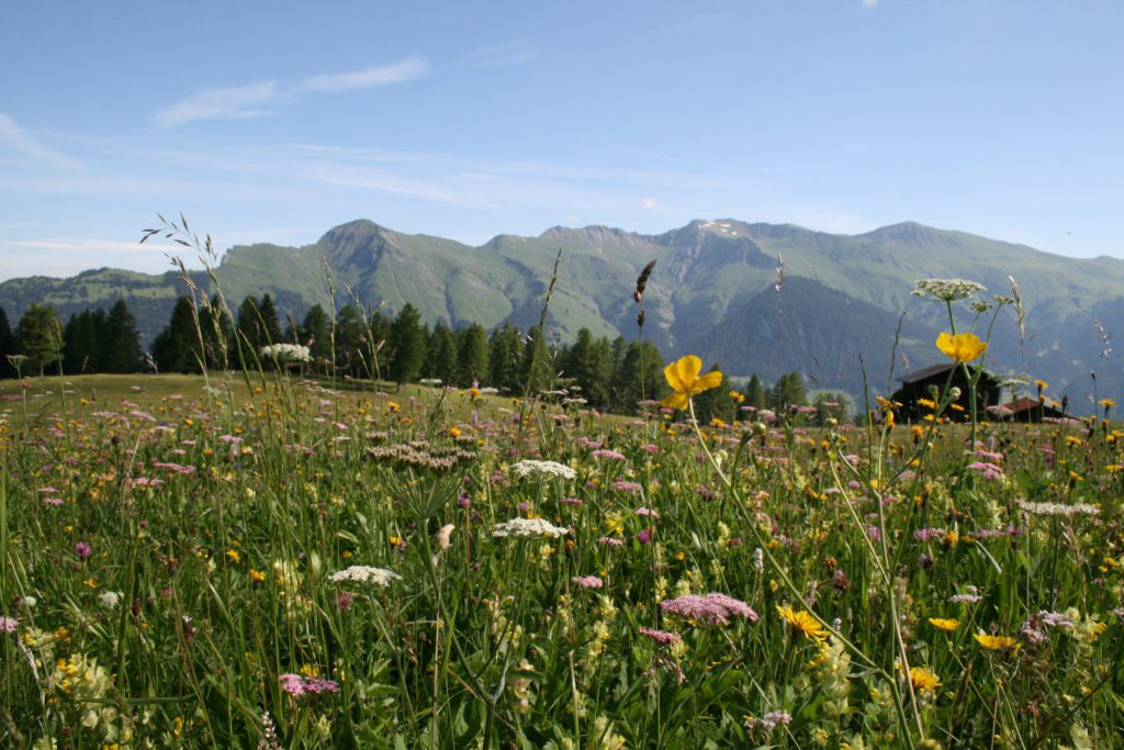 alps-of-tschiertschen-img_2032-c-pavel-laurencik-for-the-alpina