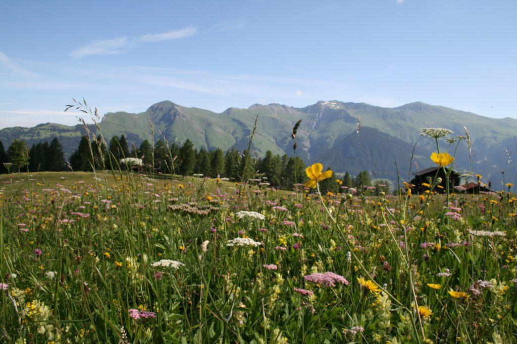 alps-of-tschiertschen-img_2032-c-pavel-laurencik-for-the-alpina