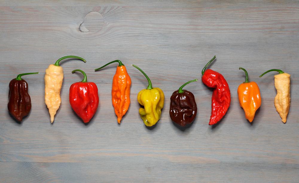Weltweit gibt es hunderte Chilisorten, für die Scharfschmecker-Küche kommt man aber mit einer Hand voll verschiedener Chilis aus. (Bild: © HANA – shutterstock.com)